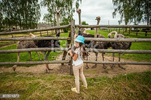 Young girl feeding ostrich at farm very happy day