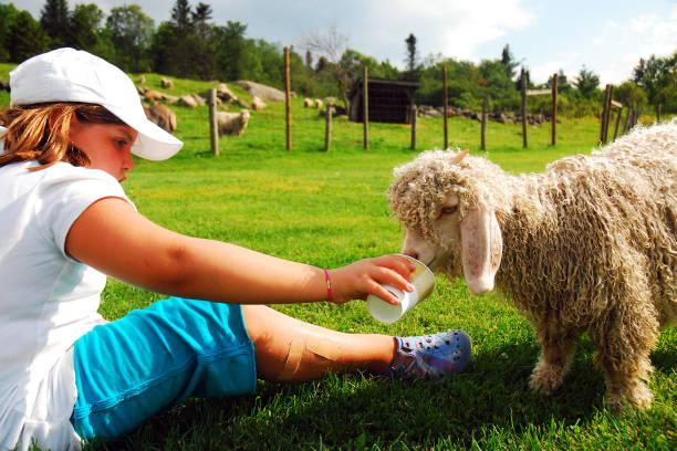 A Young Girl ernährt ein Lamm – Foto