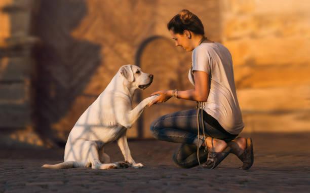 Junge Mädchen gibt einem niedlichen kleinen Labrador Retriever Hund Welpen die Hand für seine Pfote mit textfreiraum – Foto