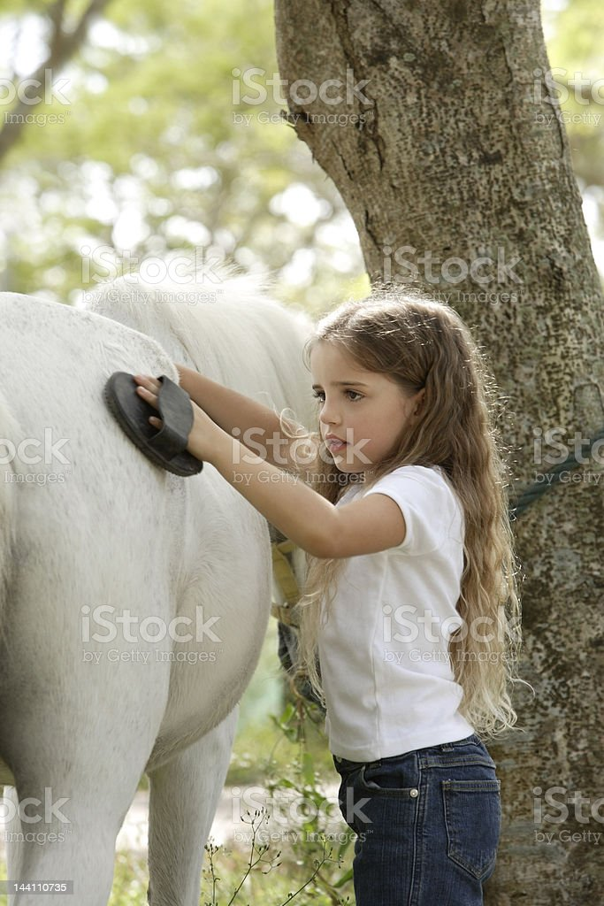 young girl grooming horse stock photo