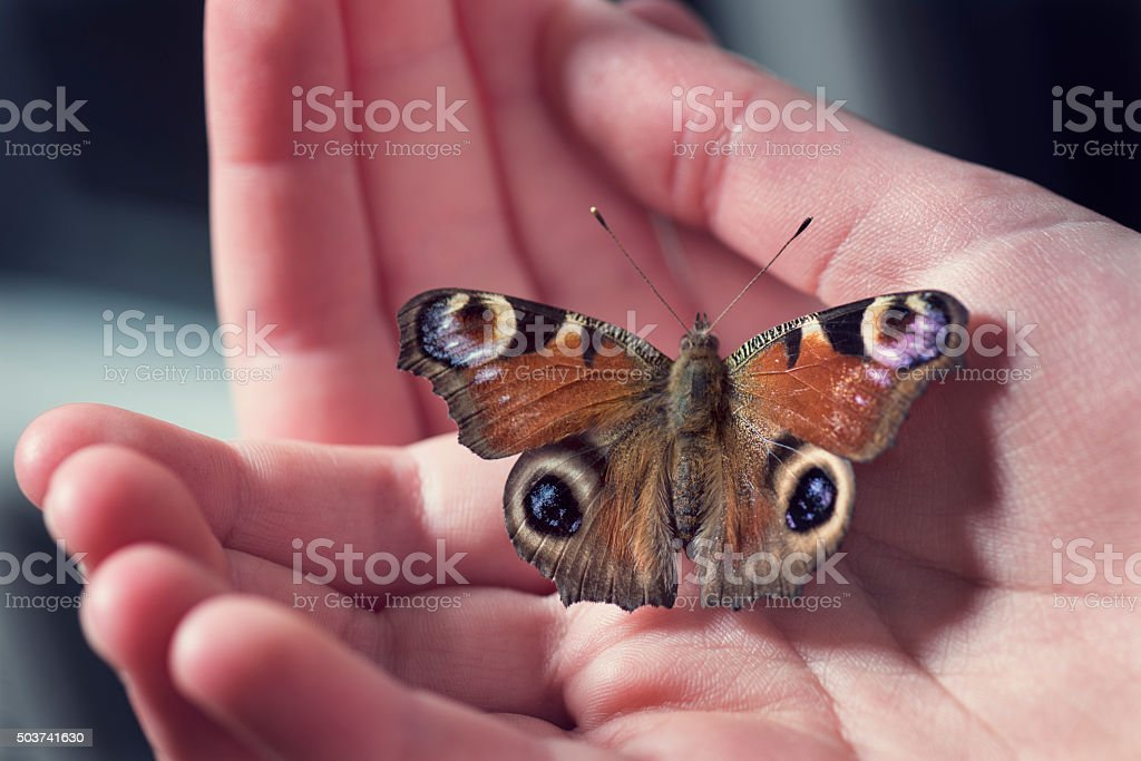 Young Girl Holding Peacock Butterfly in Her Hands stock photo