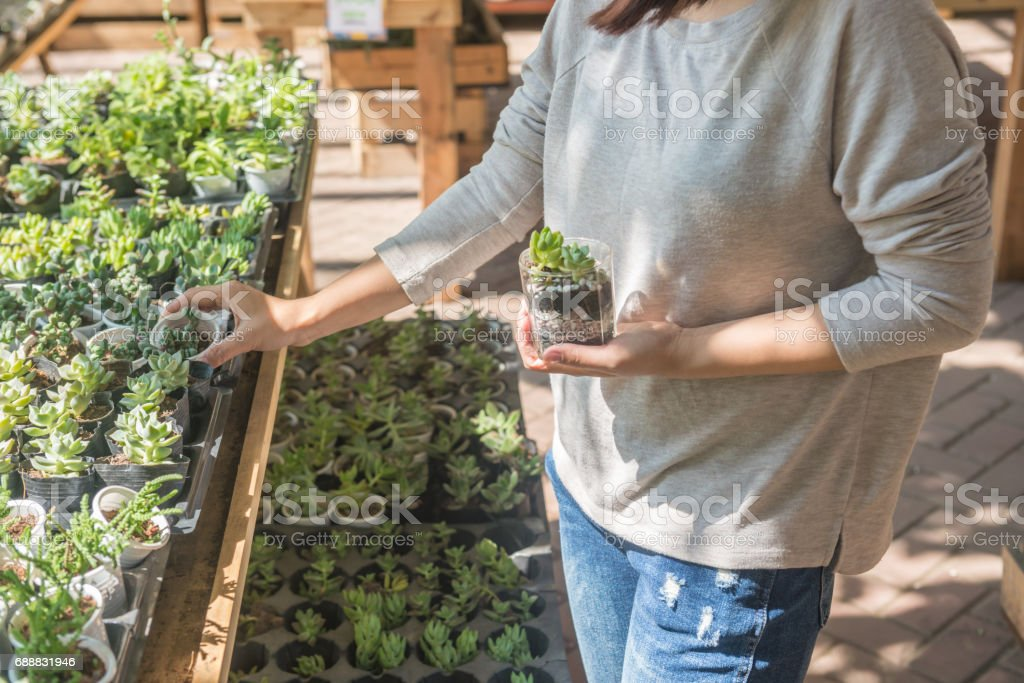 Young girl holding Succulent Plant on hand and chosing other plants in the garden stock photo