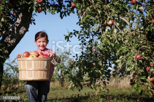 istock A young girl in an orchard picking apples 157533310