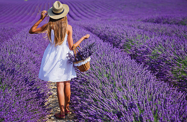 Young girl in the lavander fields stock photo