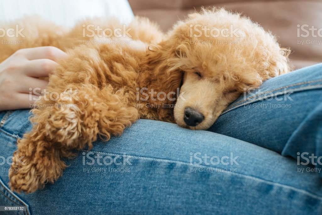 Young girl is resting with a dog on the armchair at home . stock photo