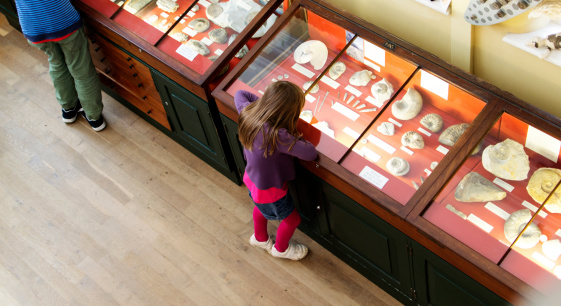 istock Young girl looking at fossils in a case at the museum 187182744