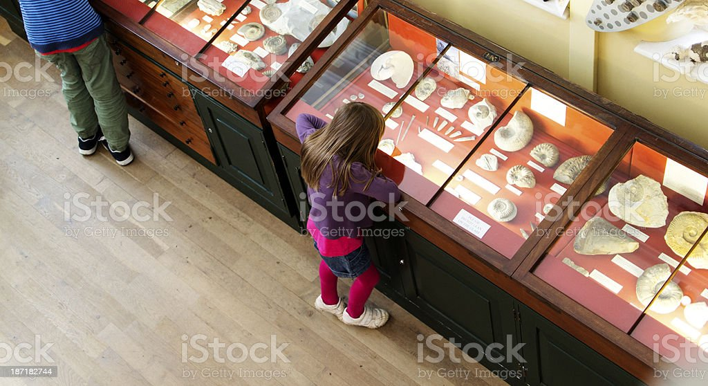 Young girl looking at fossils in a case at the museum stock photo
