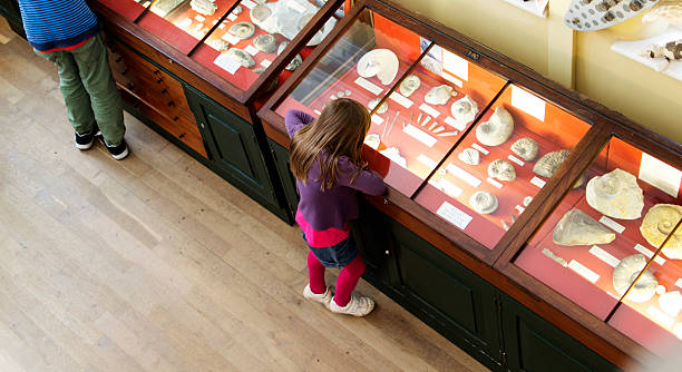 young girl looking at fossils in a case at the museum - museum stockfoto's en -beelden