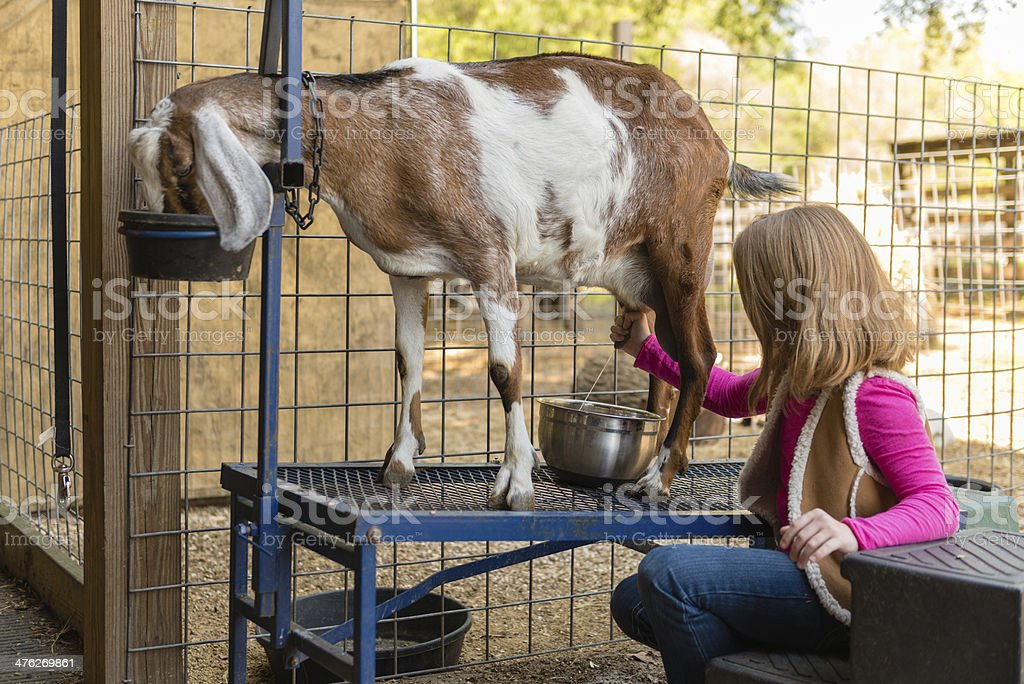 Junges Mädchen Melken Ziege Stock-Fotografie und mehr Bilder von ...