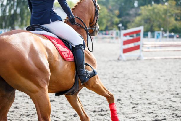 Junges Mädchen auf Sauerampfer Pferd im Galopp auf ihrem Kurs – Foto