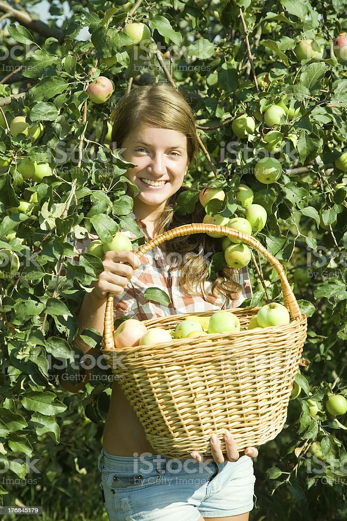 young  girl picking apples royalty-free stock photo