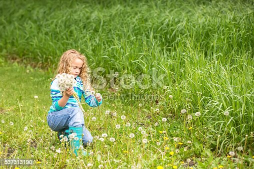 istock Young Girl Picking Bouquet of Fuzzy Dandelions 537313190