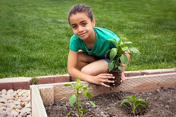 Young Girl Planting a new Plant in her Garden stock photo