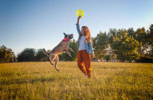 Young girl playing dog with a frisbee in the summer park. Dog is flying Young beautiful curly girl playing dog with a frisbee in the summer park, the dog is flying in the air plastic disc stock pictures, royalty-free photos & images