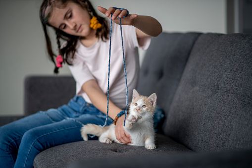 Young Girl Plays with Kitten stock photo
