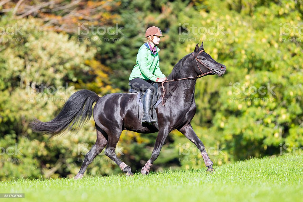 Young girl riding a black horse in autumn stock photo