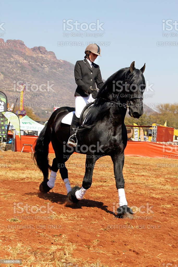 Young girl riding lovely black Friesian horse. stock photo