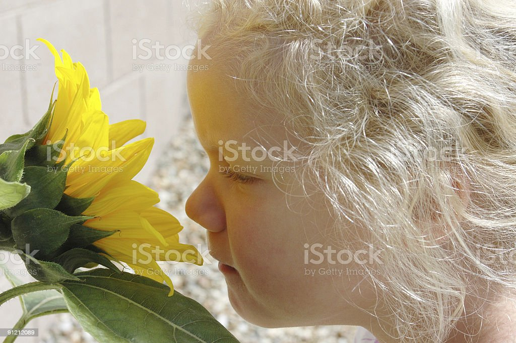 Young Girl Smelling Sunflower royalty-free stock photo