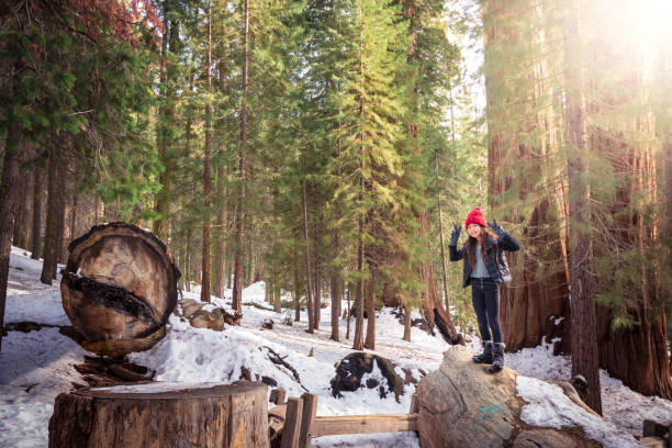 Young girl standing on toppled tree in Sequoia National Park stock photo