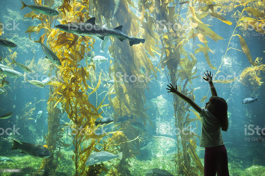 Young girl standing outstretched against aquarium glass stock photo