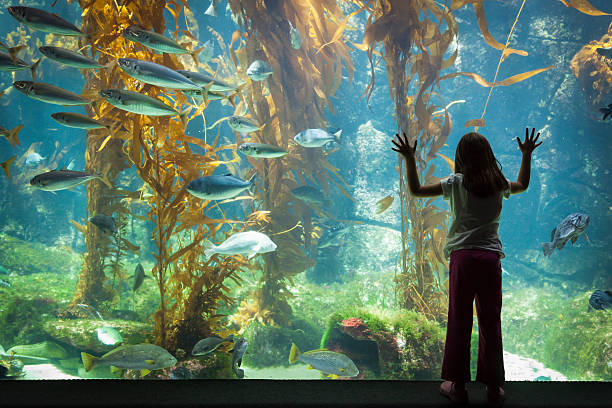 Young Girl Standing Up Against Large Aquarium Observation Glass Amazed Young Girl Standing Up Against Large Aquarium Observation Glass. aquarium stock pictures, royalty-free photos & images