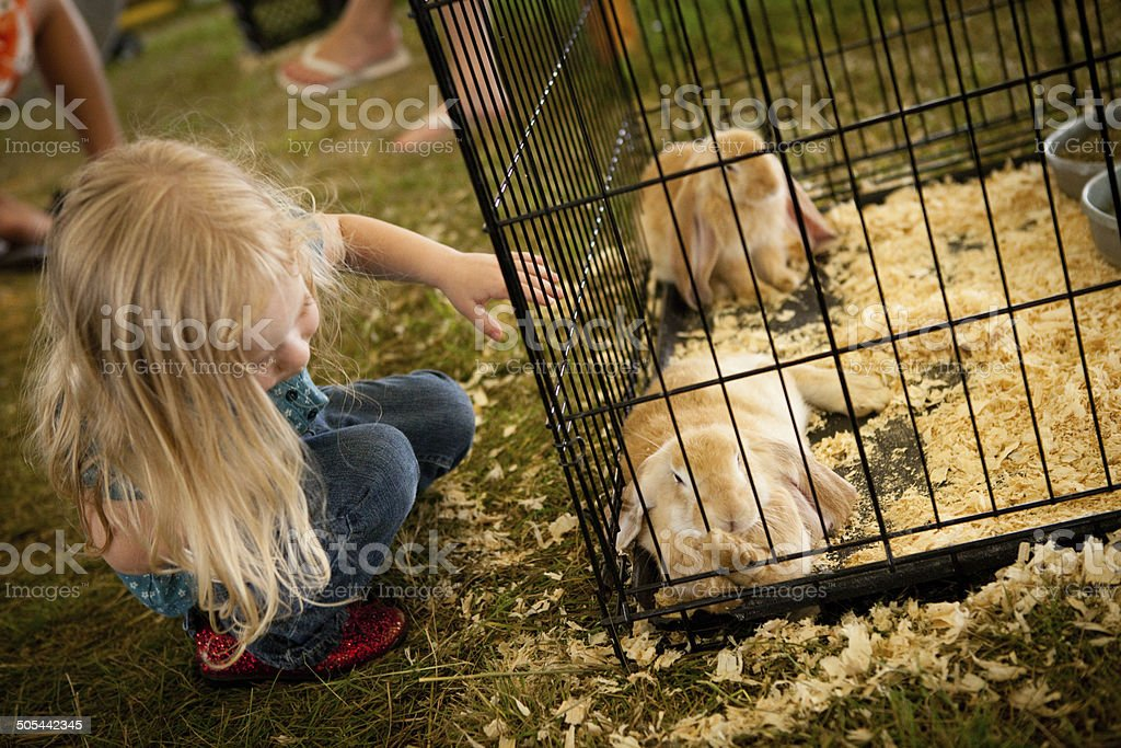 Young Girl Trying to Pet Bunny at County Fair royalty-free stock photo