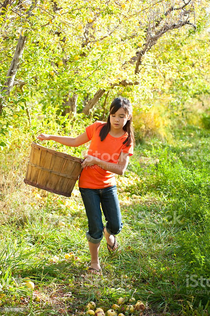 Young girl walking through orchard looking for apples stock photo