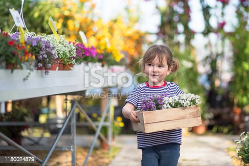 Cute young girl with developing gardening skills carrying a box of springtime flowering plants at nursery.