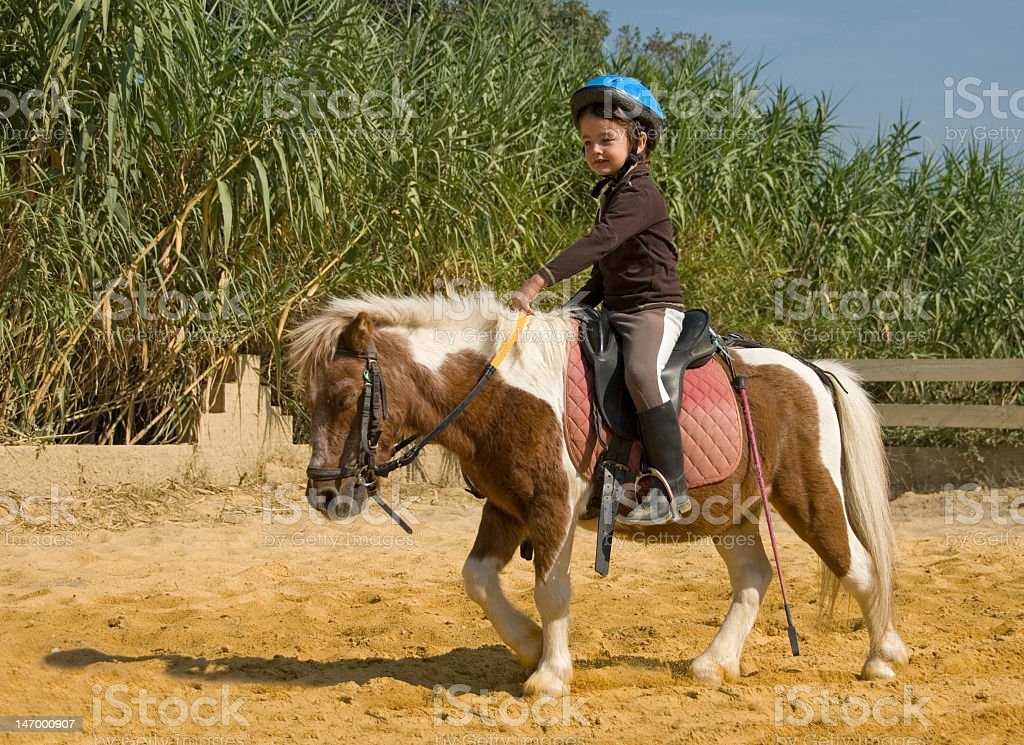 A young girl with a blue helmet riding a small horse stock photo