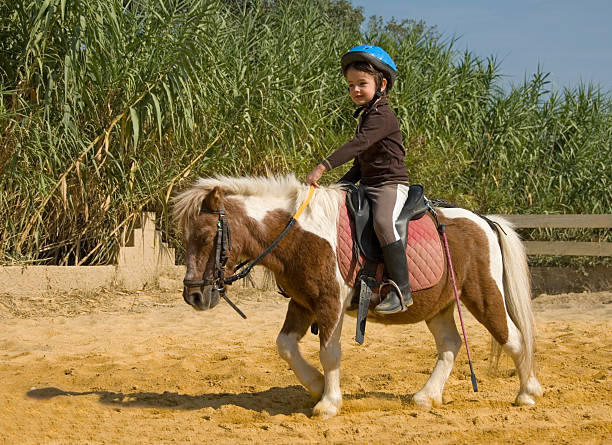 A young girl with a blue helmet riding a small horse little girl riding her miniature shetland pony pony stock pictures, royalty-free photos & images