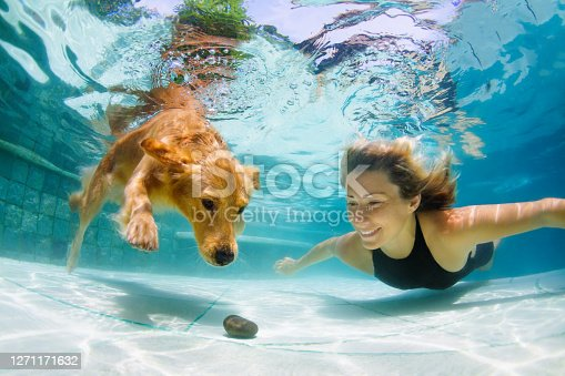 Underwater action. Young woman play with fun, training golden retriever puppy in swimming pool - jump and dive. Active water games with family pet, popular dog breed like companion on summer vacation
