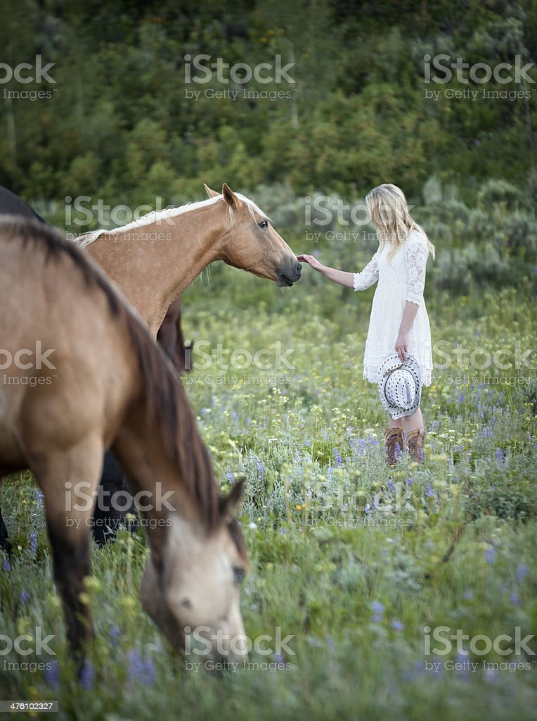 Young Girl with Horses in a Field royalty-free stock photo
