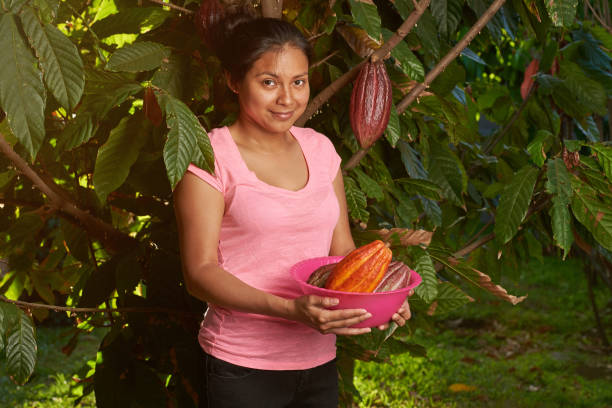 Young girl with pile of cacao pods Young girl with pile of cacao pods on sunny farm background theobroma stock pictures, royalty-free photos & images