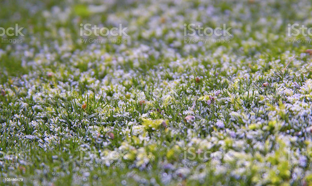 young grass royalty-free stock photo