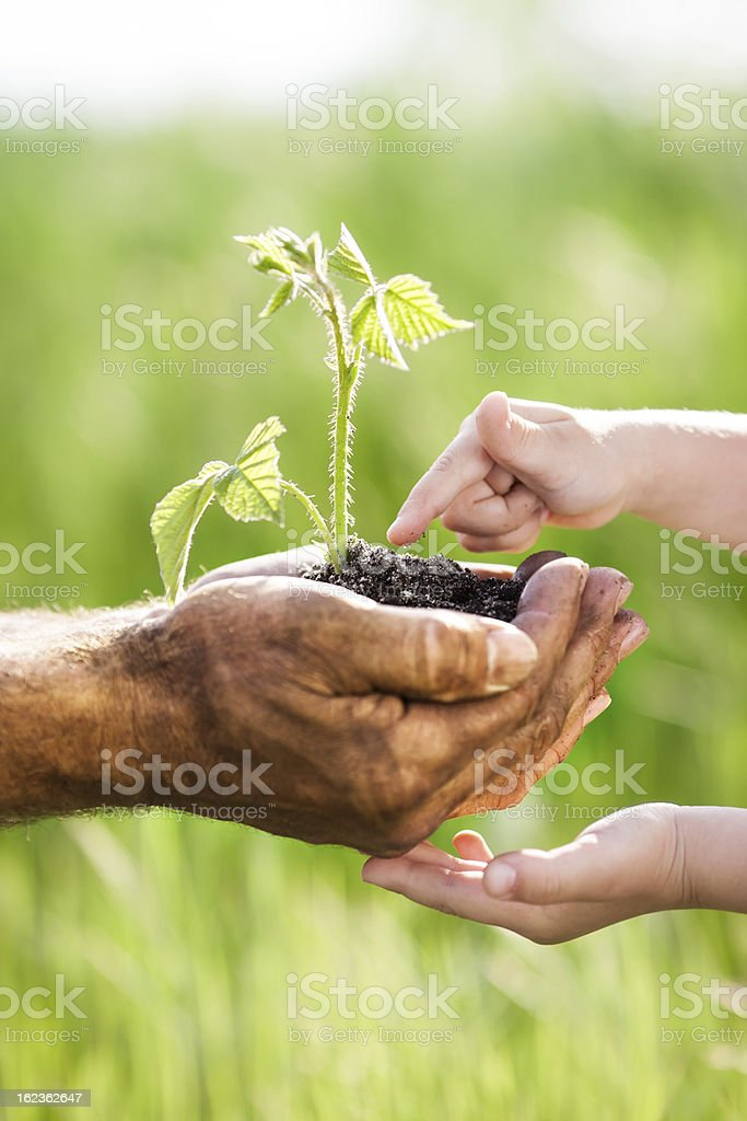 Young green plant against spring background stock photo