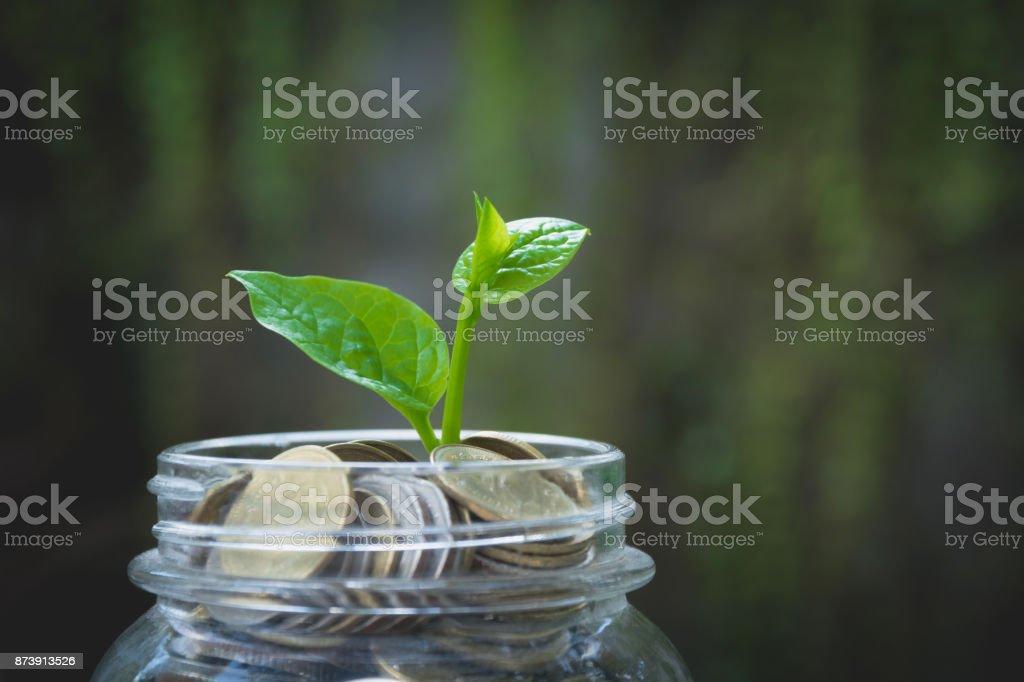 Junge grüne Pflanze mit Münze in Glas für Unternehmenswachstum und Finanzkonzept. – Foto