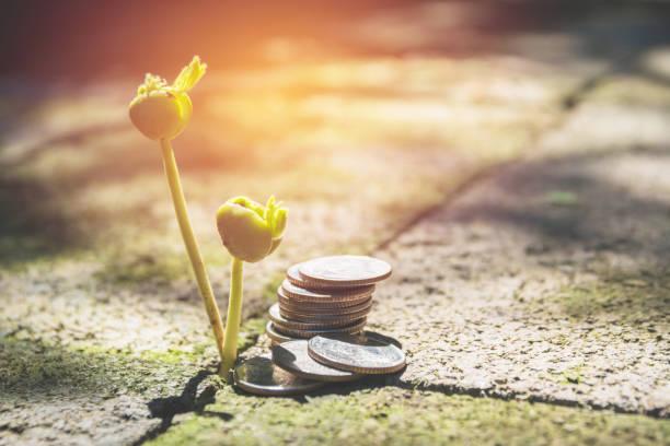 Junge grüne Pflanze mit Stack-Münze auf Boden für den wachsenden finanziellen Geschäftskonzept. – Foto