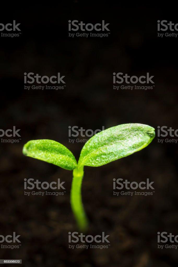 Young green seedlings stock photo