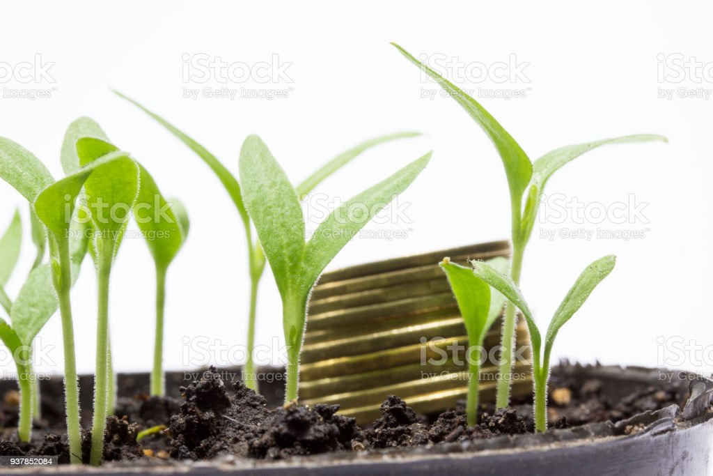 Young green sprouts grow on the background of golden coins stock photo