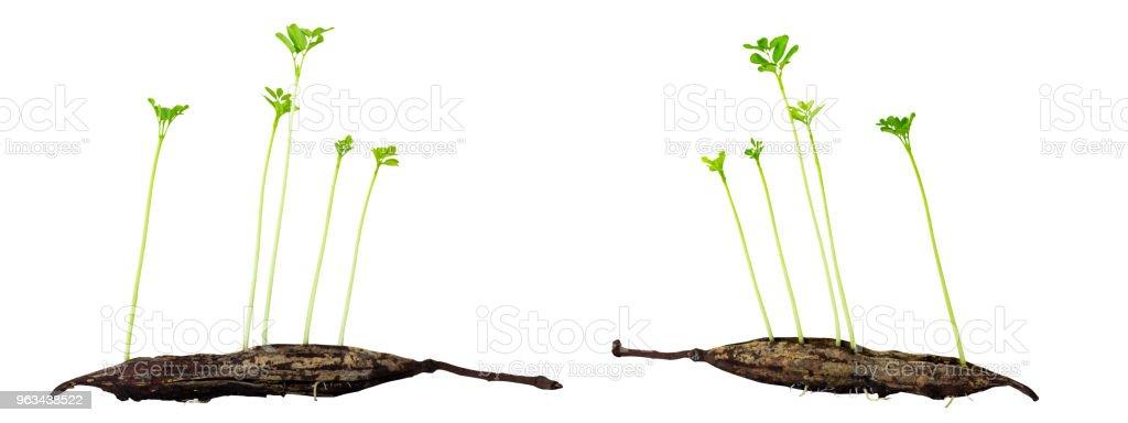 Jeune Plante croissant - Photo de Arbre libre de droits