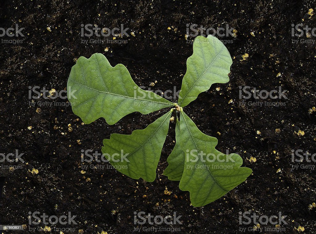 young growth royalty-free stock photo