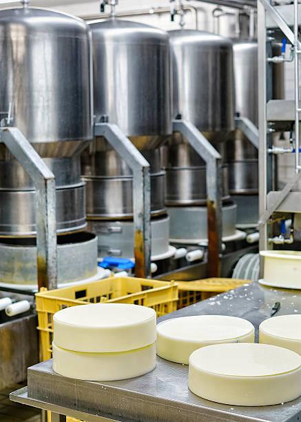 young gruyere comte cheese pressed in special forms at dairy - wie alt werden kühe stock-fotos und bilder