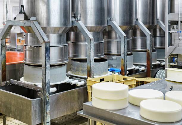 junge comte käse gepresst in sonderformen in molkerei - wie alt werden kühe stock-fotos und bilder