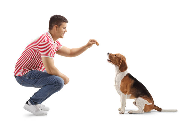 Young guy giving a biscuit to a beagle dog picture id1147401513?b=1&k=6&m=1147401513&s=612x612&w=0&h=b4a7knbinntyz5okifjaalgzurjfuqs vvgxro3n cq=