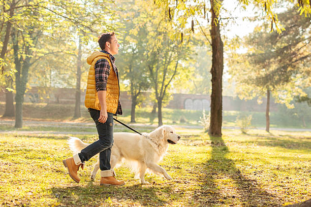 Young guy walking his dog in a park picture id497710232?b=1&k=6&m=497710232&s=612x612&w=0&h=s1olfwoeq7zpkbcizaxdqb57gepou4ac0ioaym8esum=