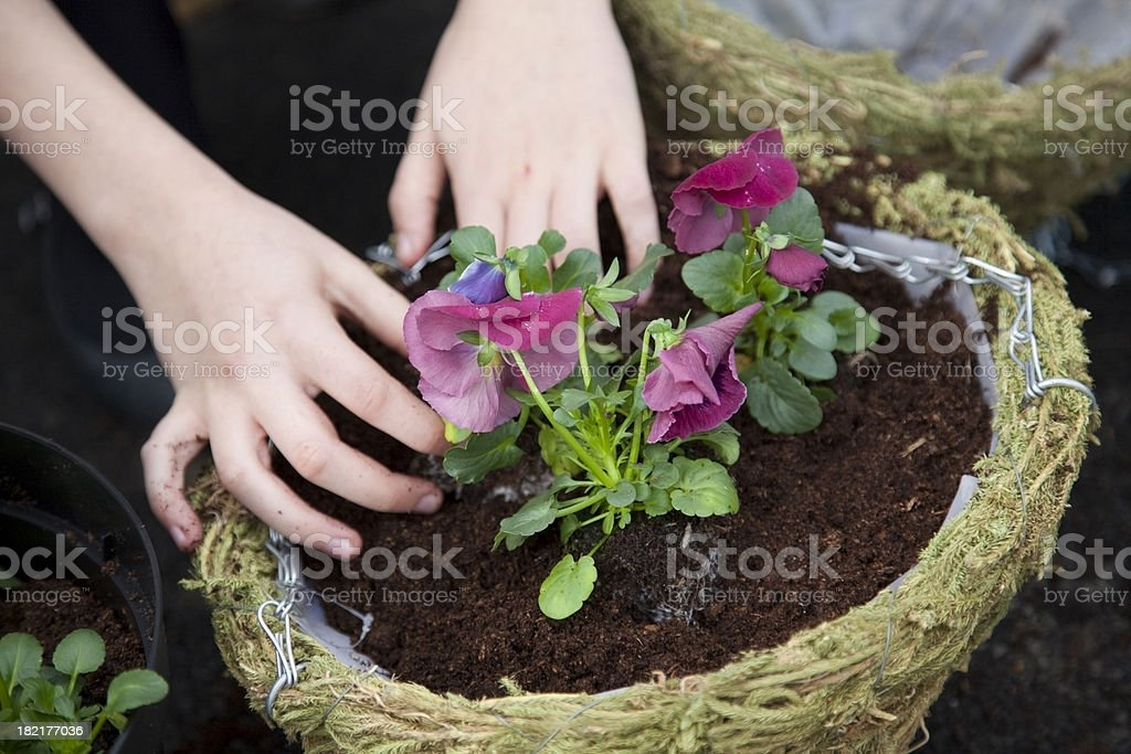 young hands planting hanging basket stock photo