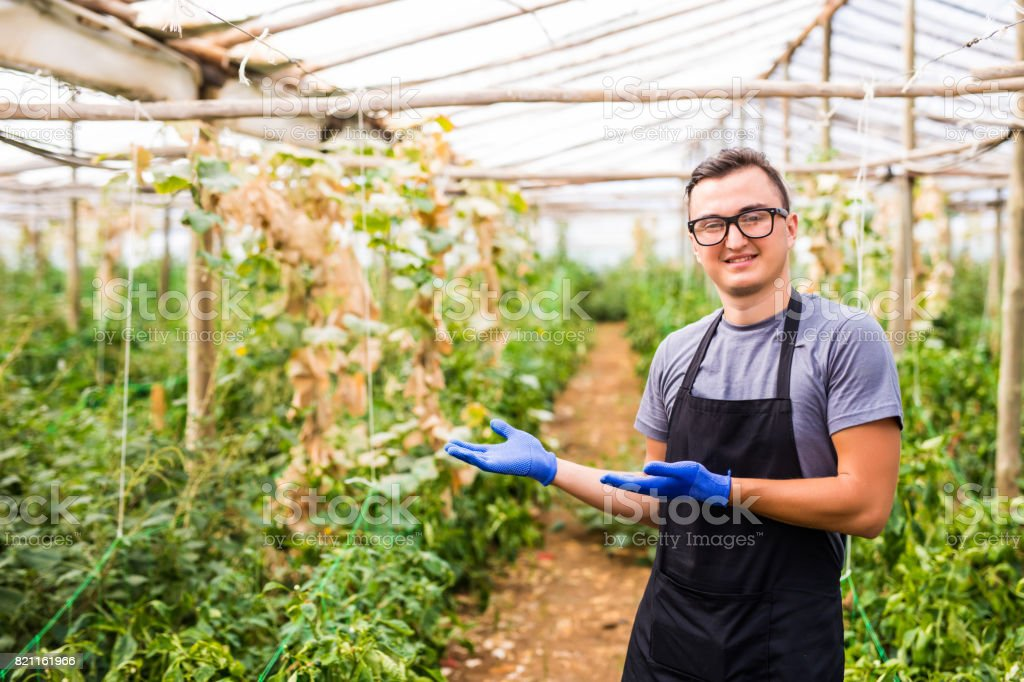 Young handsome man presenting his  vegetables business in a greenhouse stock photo