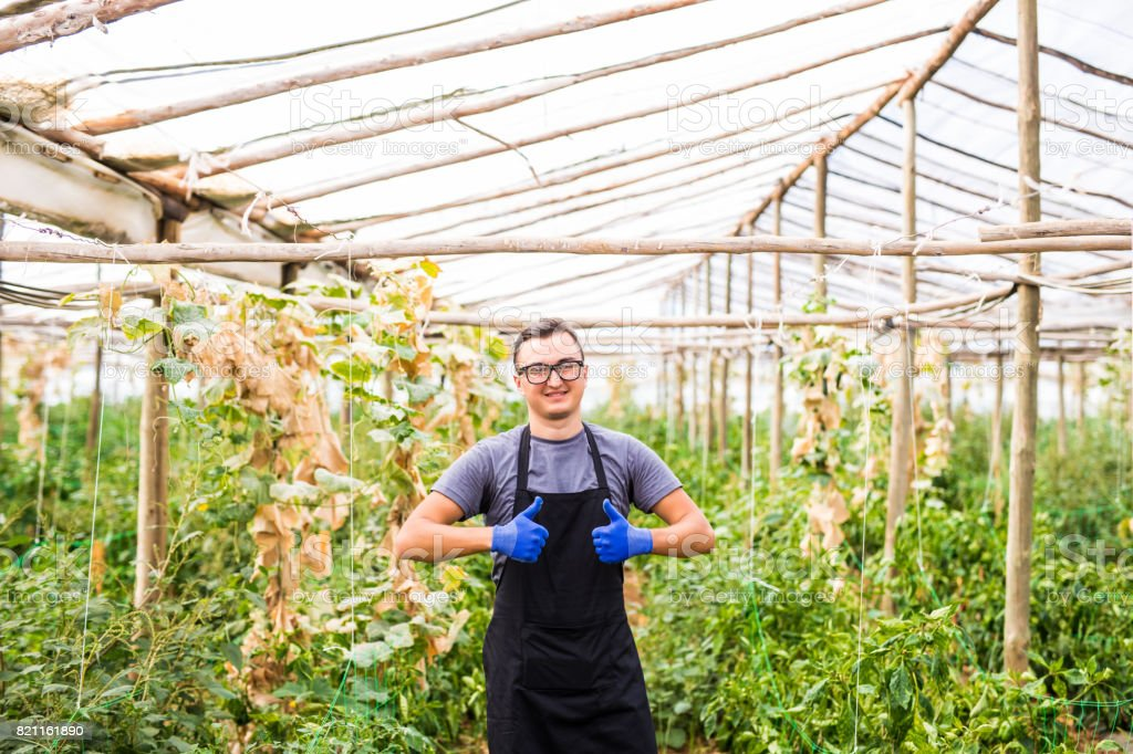 Young handsome man with okay gesture at his  vegetables business in a greenhouse stock photo