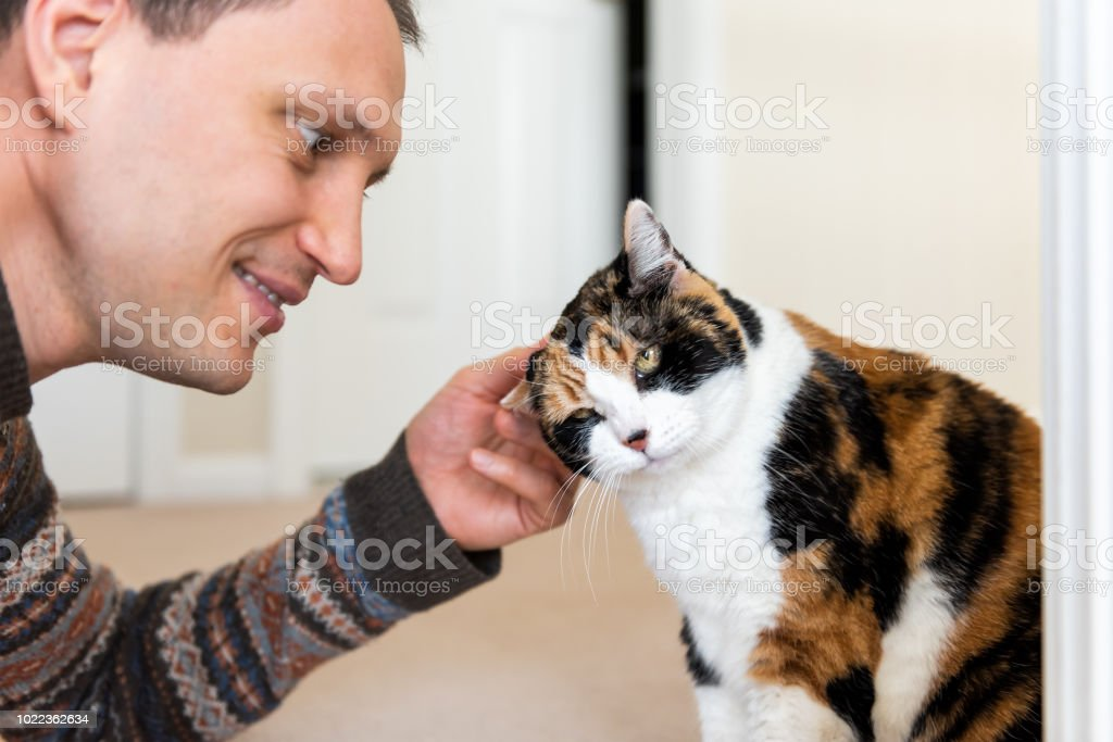 Young happy man bonding with calico cat rubbing, scratching head...