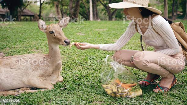 Young happy woman feeding little deer in zoo during travel in park picture id899114206?b=1&k=6&m=899114206&s=612x612&h=uf hqzvx 9vgtxcoseiibyf9egvvaloaisqvbj bvz8=